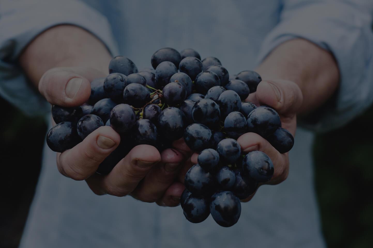 Martinborough rødvin
